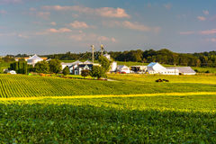 Evening light on farm fields in Howard County, Maryland. royalty free stock photography