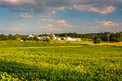Evening light on farm fields in Howard County, Maryland. Stock Photo