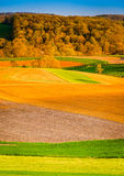 Evening light on farm fields in rural York County, Pennsylvania. Stock Image