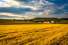 Evening light on farm fields in rural York County, Pennsylvania. Royalty Free Stock Photo
