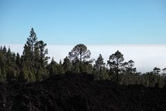 Evening light on the lava fields of the Teide volc Stock Photos