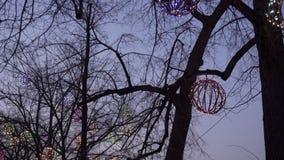 Evening lights on trees and misty promenade near Ostrow Tumski stock video footage