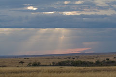 Evening in Masai Mara, Kenya. Landscape view of masai mara African savanna at dusk, with sunrays penetrating rain clouds on horizon Royalty Free Stock Photography