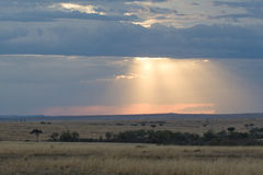 Evening in Masai Mara, Kenya. Landscape view of masai mara African savanna at dusk, with sunrays penetrating rain clouds on horizon Stock Photos