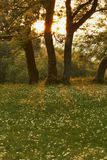 Evening Meadow Royalty Free Stock Photo