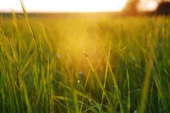 Evening in the meadow Royalty Free Stock Images