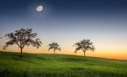 Evening on a meadow Royalty Free Stock Image