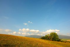 Evening meadows with tree Royalty Free Stock Photography