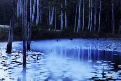Evening Mist On Pond. Mist rising off lilly pond in the evening Royalty Free Stock Photos