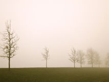 Evening Mist stock images