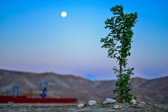 Evening Moon Life. Its a view of harsh mountains of Baluchistan, with early evening moon and rising tree of local breed Royalty Free Stock Photo