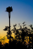 Evening Nest. Silhouette of an osprey nest in the late evening Stock Photos
