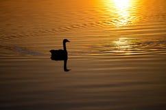 Evening pływanie Obrazy Stock