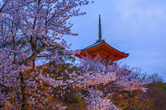 Evening. Pagoda with sky and cherry blossoms on the background. Stock Photos