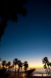 Evening Palms Stock Images