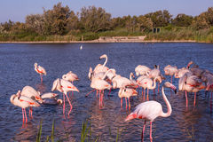 Evening in Park of Camargue,  France Stock Photography