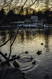 Evening Park. The sight from a sunset lit park called Inokashira Park in Tokyo Japan Royalty Free Stock Image