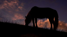 Evening Pasture in the Foothills stock footage