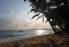 Photo of cloudy sky, palm trees, sea coast. Evening photo of cloudy sky, palm trees, sea coast Royalty Free Stock Photos