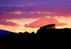 Free Evening Pines Stock Photos - 43907643