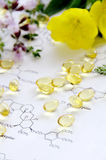 Evening primrose and capsules Stock Photo