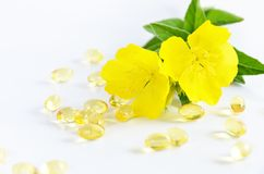 Evening primrose and capsules Stock Images