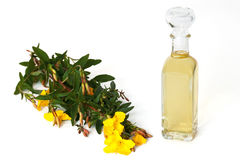 Evening primrose with oil bottle Stock Image