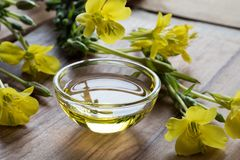 Evening primrose oil in a glass bowl Stock Images