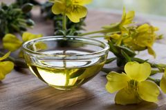 Evening primrose oil in a glass bowl on a wooden table Stock Photography