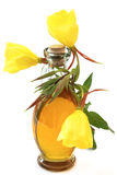 Evening primrose oil. Evening primroses with oil bottle on white background Royalty Free Stock Photo