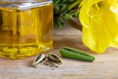 Evening primrose pods, seeds, oil and flowers Royalty Free Stock Photos