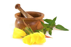 Evening primrose with wooden mortar Stock Image