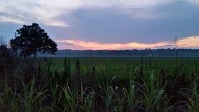 Evening Rain Stock Photo