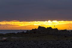 Evening red on the beach of the Atlantic in Iceland Royalty Free Stock Photography
