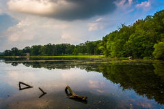 Evening reflections in a swampy area of Lake Pinchot, Gifford Pi Stock Photography