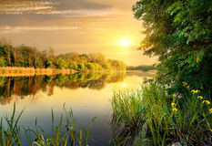 Evening on river. Bright yellow evening on a calm river in forest Royalty Free Stock Images