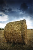 Evening rural landscape royalty free stock photo