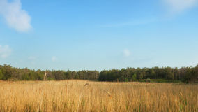 Evening rural landscape. Forest, sky with clouds and sun-scorched grass Stock Image