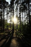 Sun Shining through Trees in Priosersk royalty free stock image
