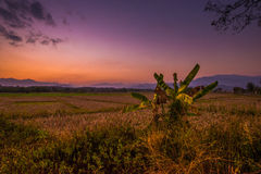 Evening Scene of Nature Stock Images