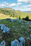 Evening scenery of apuseni national park. Mountain landscape with spruce forest on grassy hills with stones. warm autumn weather with clouds on the sky royalty free stock photography