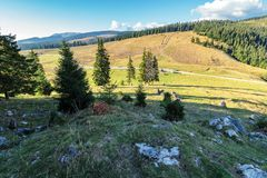 Evening scenery of apuseni national park. Mountain landscape with spruce forest on grassy hills with stones. warm autumn weather with clouds on the sky stock photos