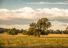 Evening Scenery, Liverpool Plains Australia Royalty Free Stock Photos