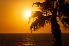 Evening sea, palm trees Royalty Free Stock Photography