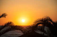 Evening sea, palm trees, sunset Stock Image