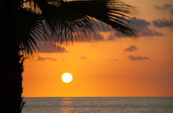 Evening sea, palm trees, sunset Royalty Free Stock Photo
