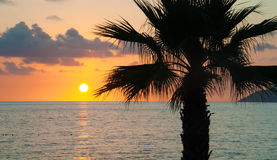 Evening sea, palm trees, sunset Stock Photos