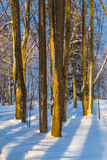 Evening shades in a park. Evening shades in a winter park Royalty Free Stock Image