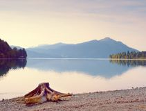 Evening shore of Alps lake. Beach with dead tree stump. Stock Photography