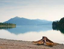 Evening shore of Alps lake. Beach with dead tree stump. Stock Image